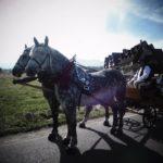 konie na chrzciny