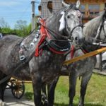 konie na pogrzeby