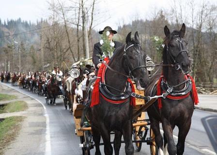 konie na wesela