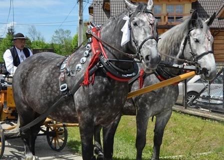 konie na wesela zakopane murzasichle poronin